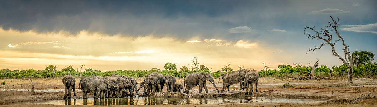 Elephant herd at watering hole