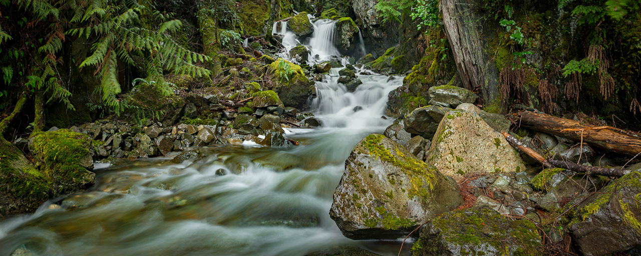 Forest waterfall 2