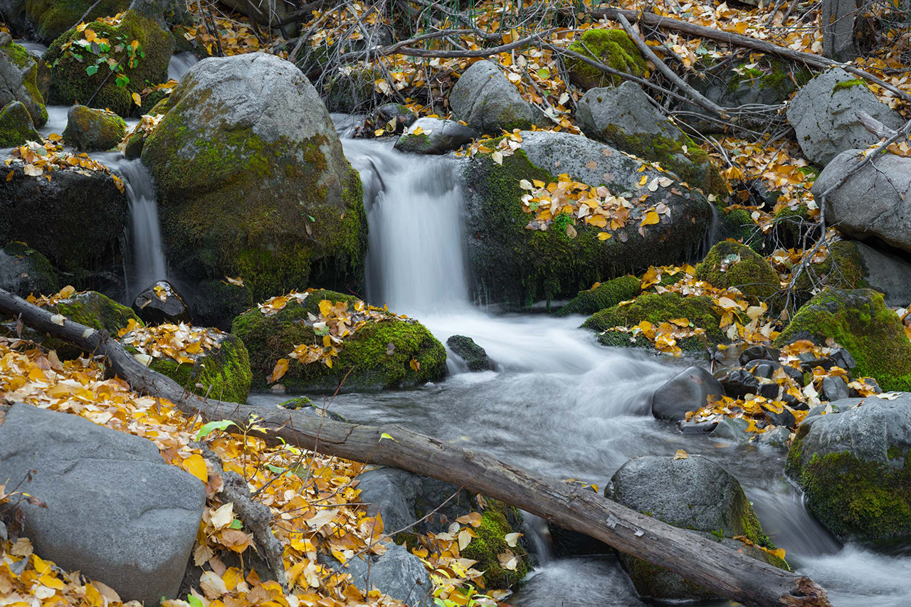 Forest waterfall 1